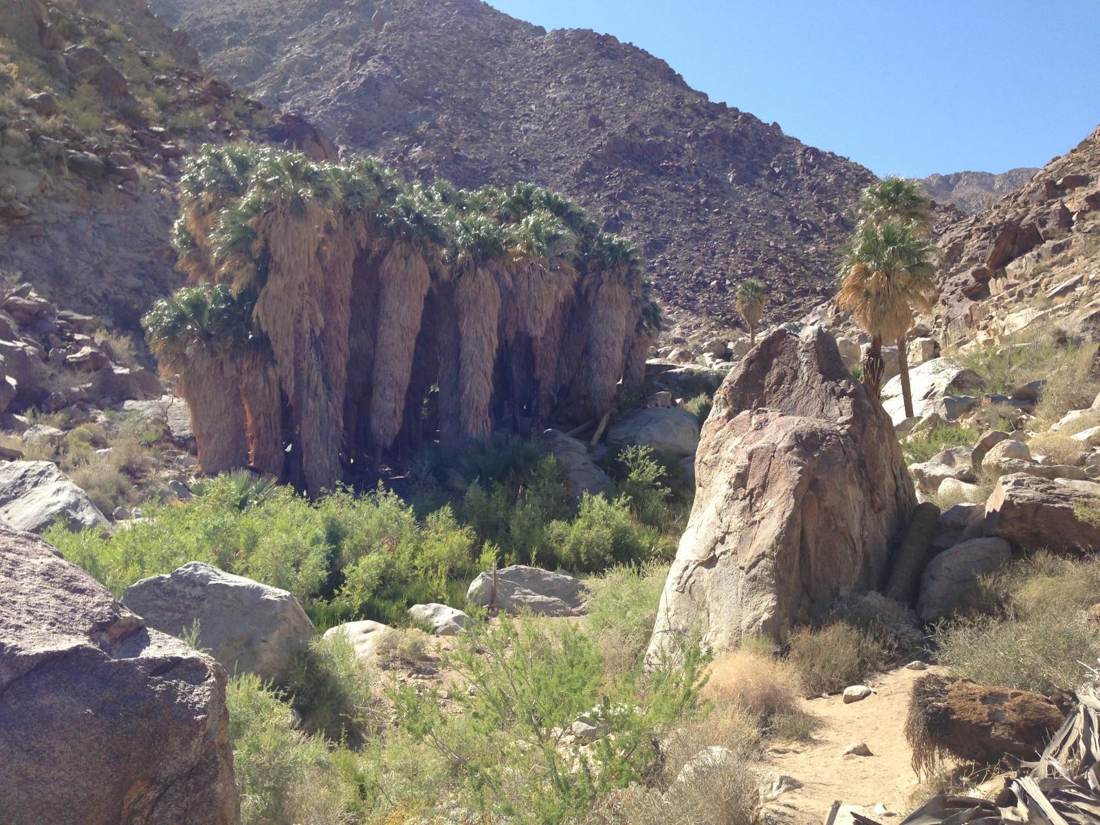 Anza Borrego - Palm Grove - Hike