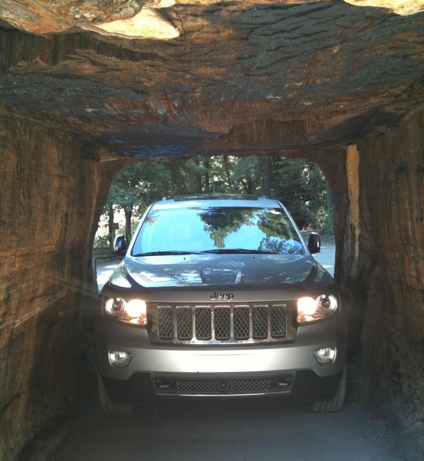 Drive-through Redwood Tree in Northern California.