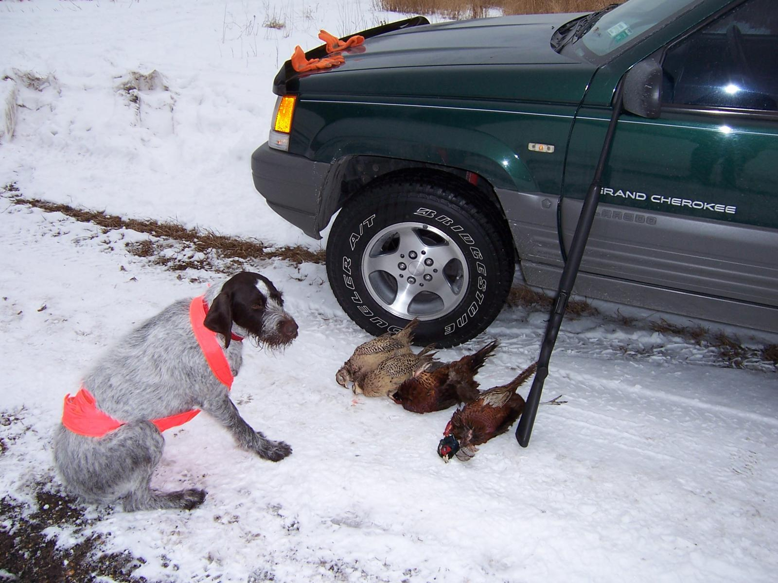 pheasant hunt with zj  and dog (snowwhite, dont ask)