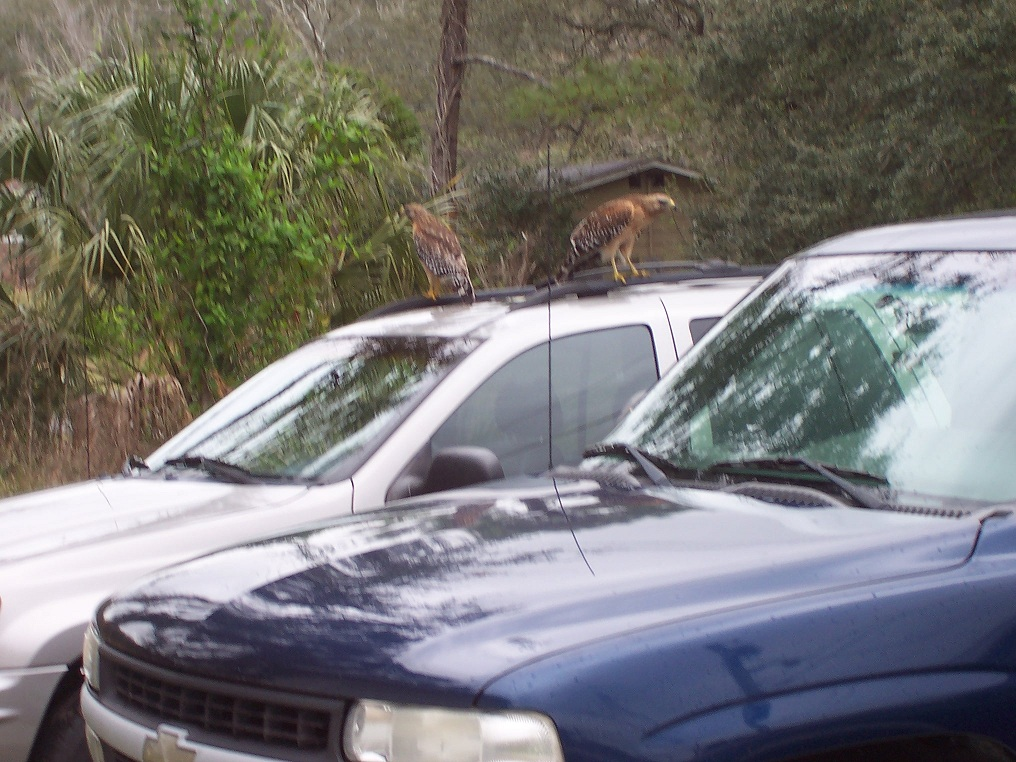 Who needs an alarm system when ya have these bad boys on your WJ every morning!